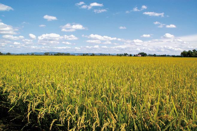 北海道の米作り発祥の地 恵庭